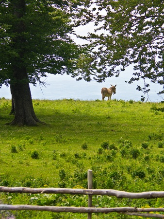serbia landscape: Donkey enjoys landscape view and a green grass off course, Beljanica, east Serbia Stock Photo