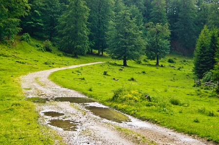 Mountain road after the rain, Beljanica, east Serbia photo