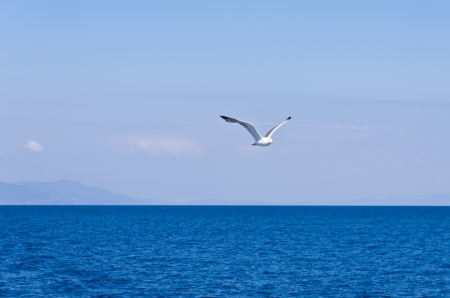 Seagull flying over Aegean sea with greek islands in background, somewhere in Greece photo