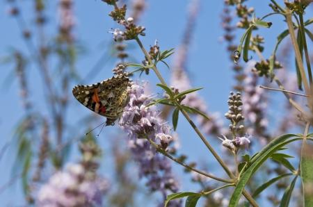 Butterfly on a flower by the lake near Porto Koufo in Greece