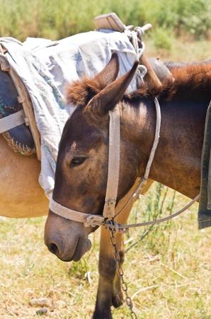 Donkeys - best transportation through greek mountains, Sithonia, Greece Stock Photo - 22022911