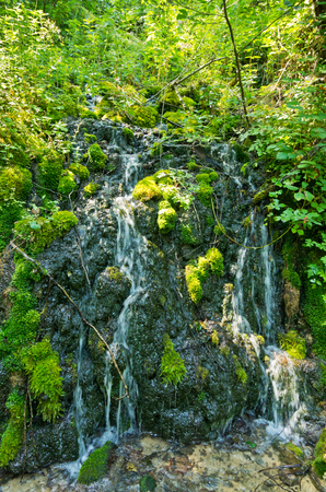Wellspring at Tara mountain and national park, west Serbia Stock Photo - 23005792