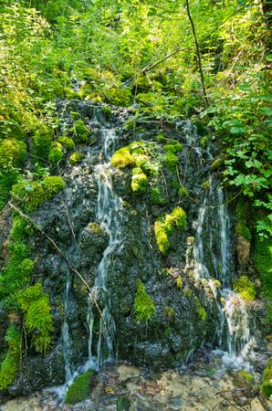 tara: Wellspring at Tara mountain and national park, west Serbia Stock Photo