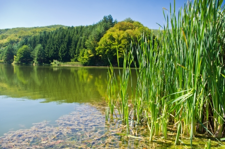 One of many lakes at Semenic national park, Banat region, west Romania photo