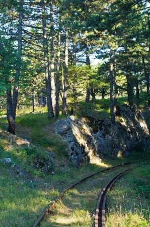forest railroad: Very old railroad through forest terrain, Anina, Romania