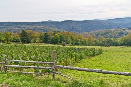 serbia landscape: Viewpoint on a landscape of mount Bobija, wooden fence, plantation of raspberries, haystacks, meadows, hills and colorfull forests, west Serbia