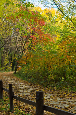 Path with a wooden fence through the forest colored in autumn colors, Belgrade, Serbia