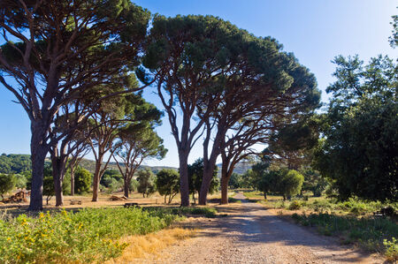 arkady: Mediterranean flora and trees by a gravel road to Arcady monastery, land cultivated by monks, island of Crete, Greece