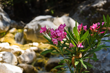 Beautiful plants and flowers photo