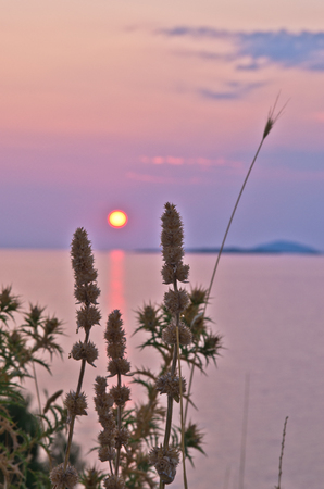 sithonia: Sunset at sea with some mediterranean herbs in foreground at Sithonia, Greece
