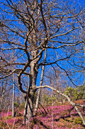 branching: Branching tree on a mountain slope in early spring, mount Stolovi, Serbia Stock Photo