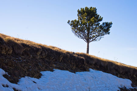 Last snow and a tree in early spring, mount Stolovi, Serbia photo