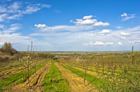 serbia landscape: Orchards in bloom by Danube river at early spring, Serbia Stock Photo