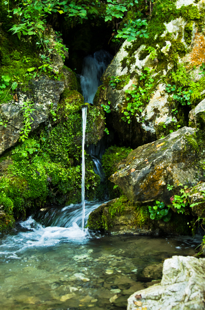 tara: Wellspring at Tara mountain and national park, west Serbia Stock Photo