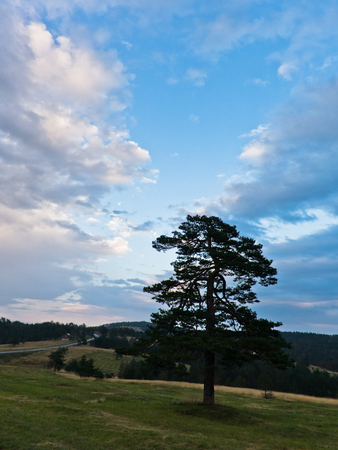 divcibare: Landscape of Divcibare mountain with trees and meadows at sunset, west Serbia Stock Photo