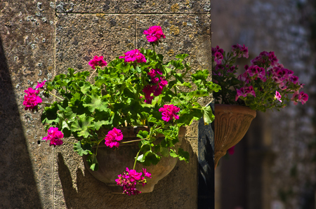 magenta flowers: Flowerpot with beautifull magenta flowers on a wall at streets of Erice Sicily Italy Stock Photo