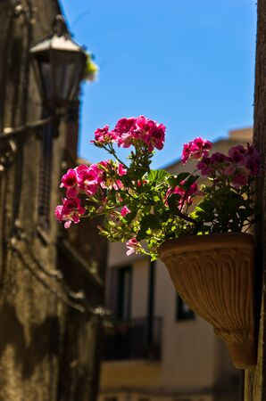 beautifull: Flowerpot with beautifull magenta flowers on a wall at streets of Erice Sicily Italy Stock Photo