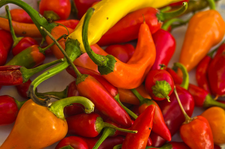 flavours: Different colors, types and flavours of a hot chili pepers made in Serbia