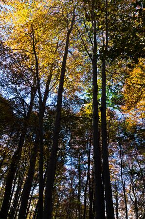 trompo de madera: Colorful trees in a forest on a sunny autumn day, Serbia Foto de archivo