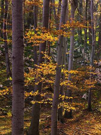 national forests: Inside forests of Djerdap national park on a fall sunny day, east Serbia Stock Photo