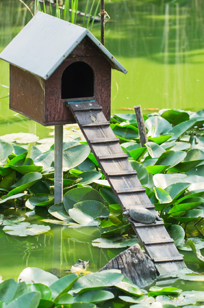 waterlilly: Little wooden house on a pond with small turtle at summer morning
