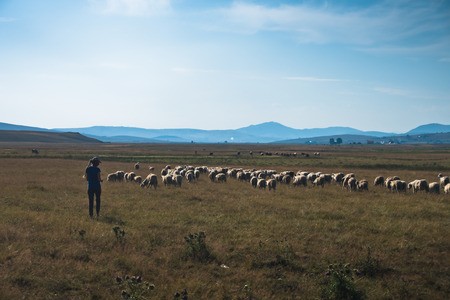 serbia landscape: Shepherdess with a flock of sheeps at Pe�ter plateau landscape in Serbia Stock Photo