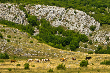 serbia landscape: Detail from panoramic view of Pe�ter plateau landscape in southwest Serbia Stock Photo