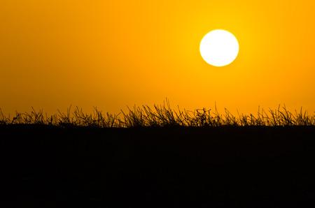 sithonia: Sunset over mediterranean dry grass near sea coast in Sithonia, Greece