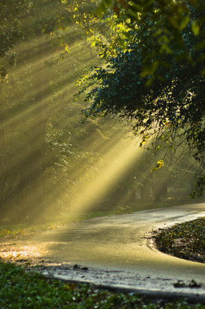 Light bursts on a forest road after the rain in Kosutnjak, Belgrade, Serbia Banco de Imagens