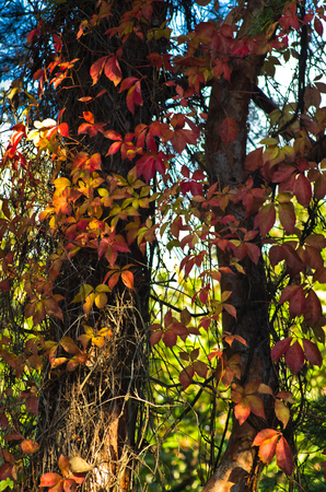 Colorful leaves on a tree at sunny autumn day
