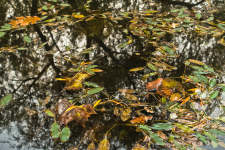 Fallen leaves and reflection of trees in a small lake at autumn Stock Photo