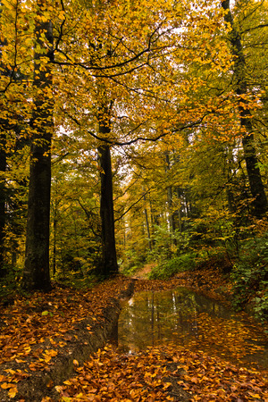 Detail of forest path in autumn colors, forest at mountain Goc, Serbia Stock Photo