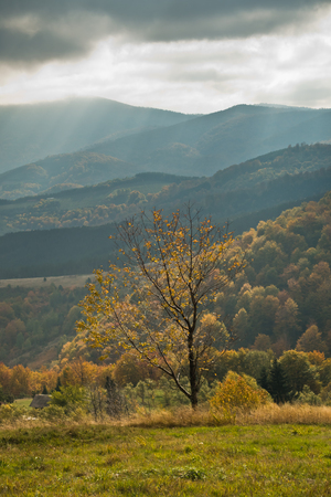 Overcast sky over meadow and trees in autumn colors, mountain Goc, Serbia