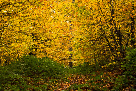 Autumn colors of a forest at mountain Goc in Serbia Stock Photo