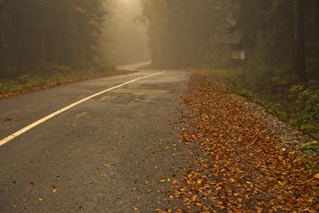 Mountain road in fog at autumn, mountain Goc in Serbia Stock Photo