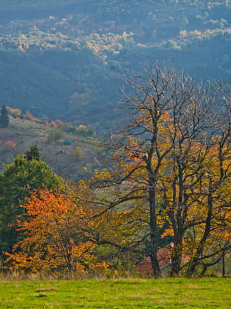 Overcast weather over the meadows and trees in autumn colors, mountain Goc, Serbia