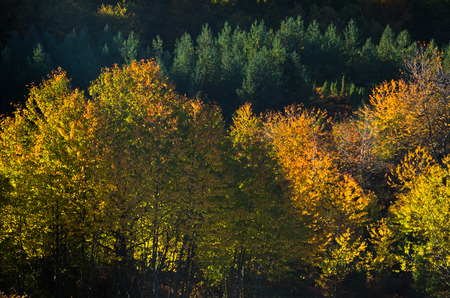 Detail of autumn forest colors at rolling hills of Zeljin mountain, Serbia