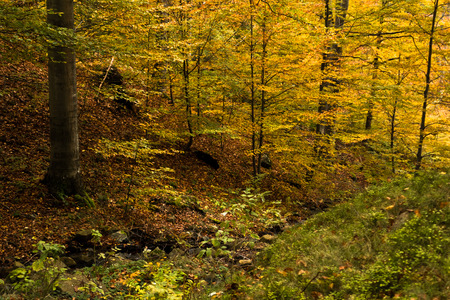 Autumn colors of a forest at Goc mountain, Serbia Stock Photo