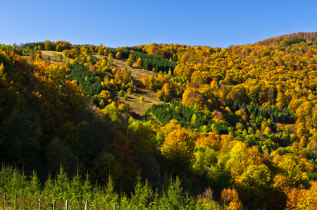 Autumn forest colors at hills of Zeljin mountain, Serbia Stock Photo