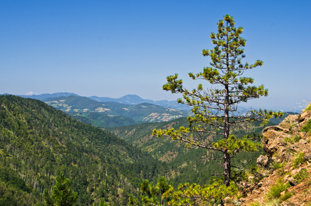 Landscape of Divcibare mountain at sunny summer morning, west Serbia