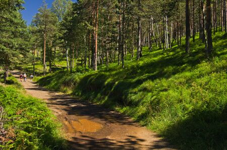 Forest path at Divcibare mountain, west Serbia