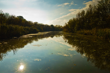 Sun reflection at swamp water on a sunny morning, protected natural swamp area of Carska bara, large natural habitat for birds and other animals in north Serbia