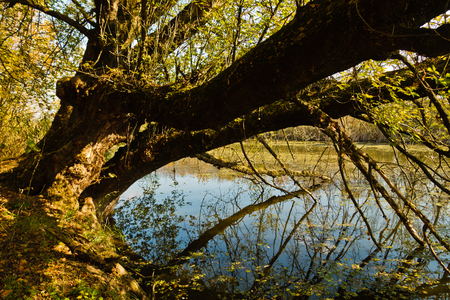 Tree leaning over water at swamp channel of Carska bara, large natural habitat for birds and other animals in north Serbia