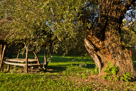 Picnic table and big old tree on a sunny morning at protected natural area of Carska bara, large natural swamp habitat for birds and other animals in north Serbia