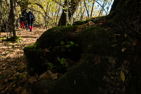 Trekking through swamp area at Carska bara, large natural habitat for birds and other animals in north Serbia Stock Photo