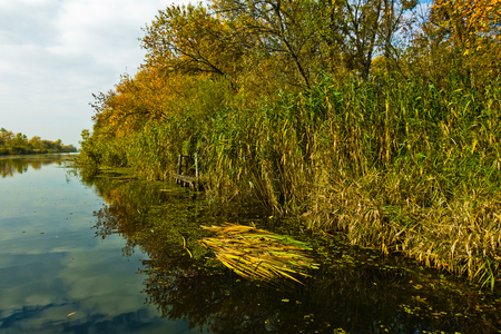 Sailing through swamp channels on a sunny morning at protected natural swamp area of Carska bara, large natural habitat for birds and other animals in north Serbia Stock Photo