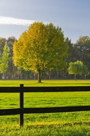 Green grass and colorful tree surrounded by a wooden fence on a golf course at Ada river island in Belgrade, Serbia