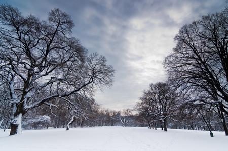 Snow path through forest clearing under heavy winter clouds, Kosutnjak forest, Belgrade, Serbia Stock Photo