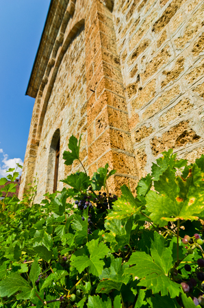 Vine around the wall of Ra?a monastery established in 13. century, west Serbia Banco de Imagens