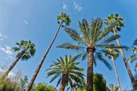 Variety of palms and other trees against blue sky